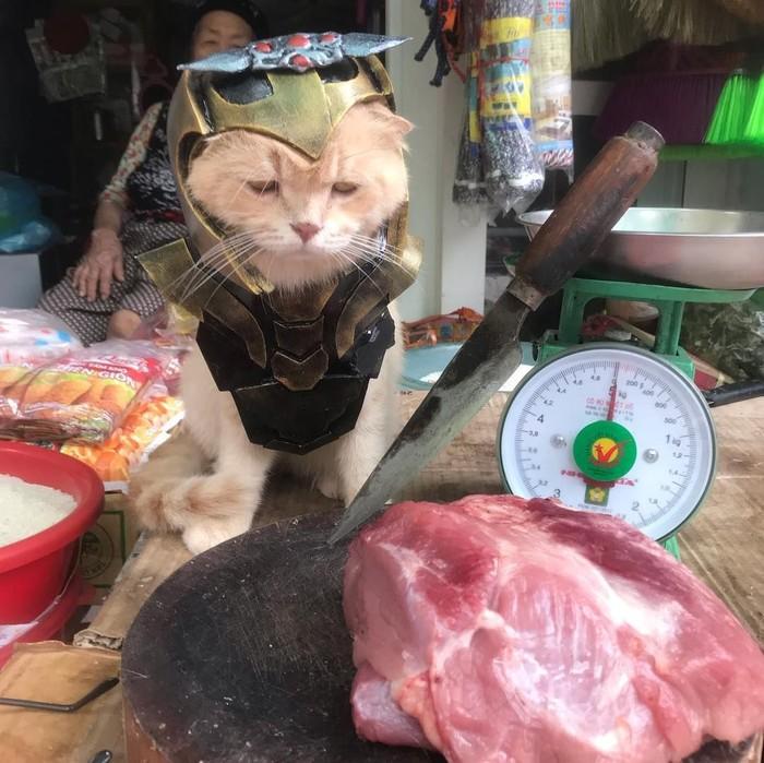 Pemilik kucing ini terbilang rajin dan kreatif membuat kostum untuk kucingnya. Kali ini kucing berbulu lebat ini hadir dengan kostum avengers. Foto: instagram @dog1501