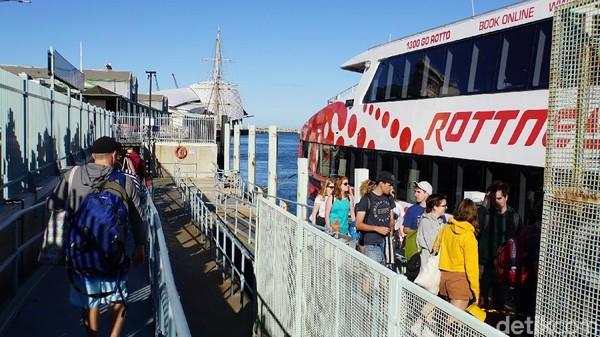 Turis juga bisa ke pulau ini naik kapal 90 menit dari Barrack Street di Kota Perth dan 45 menit naik kapal dari Northport, Fremantle (Masaul/detikcom)