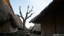Penampakan Pohon Cinta di Lombok