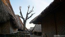 Kisah Pohon yang Jadi Saksi Cinta di Lombok