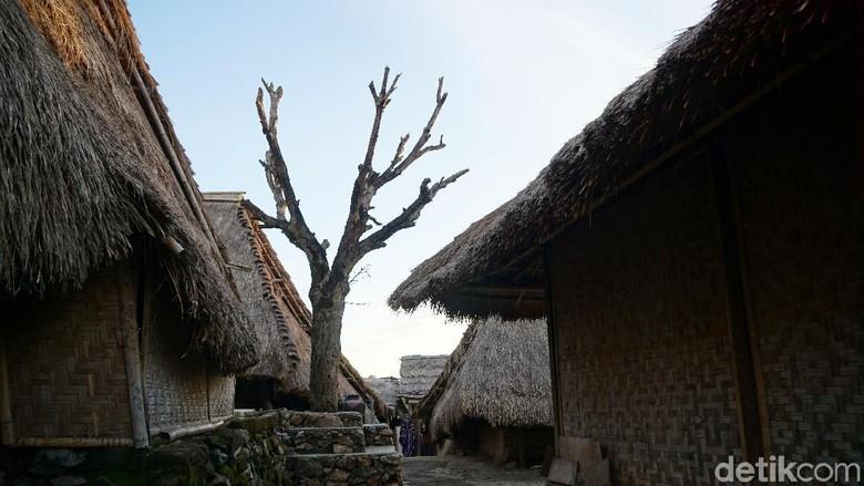 Pohon Cinta di Desa Sade, Lombok Tengah (Syanti/detikcom)