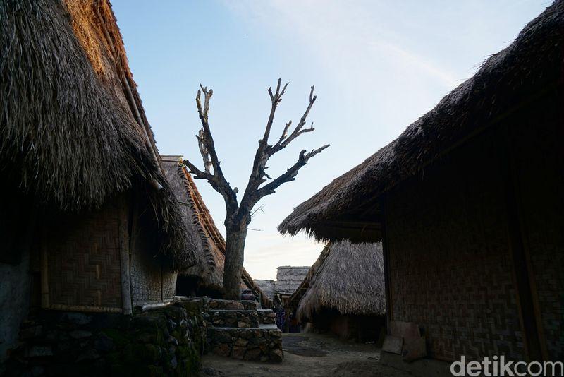 Keliling Desa Sade di Lombok Tengah kamu akan melihat sebuah pohon kering yang berada di tengah-tengah desa. (Syanti/detikcom)