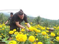 Taman Bunga di Desa Sapit, Lombok Timur (Pokdarwis/istimewa)