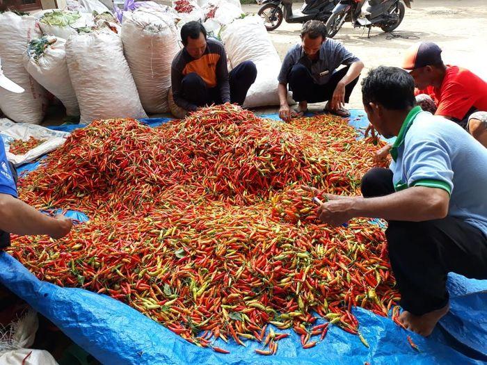 Cabai petani Tuban/ Foto: Kementan
