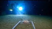 Film Underwater dan Kenyataan dalam Palung Mariana
