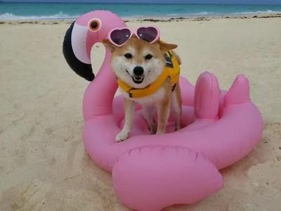 Kenalan Sama Riri, Anjing Lucu yang Suka ke Pantai