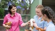 Sekolah Indonesia Seharusnya Miliki Kurikulum Pertanian Seperti di Australia