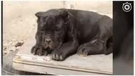 Gara-gara Nama 2 Anjingnya, Seorang Pria Ditahan di China