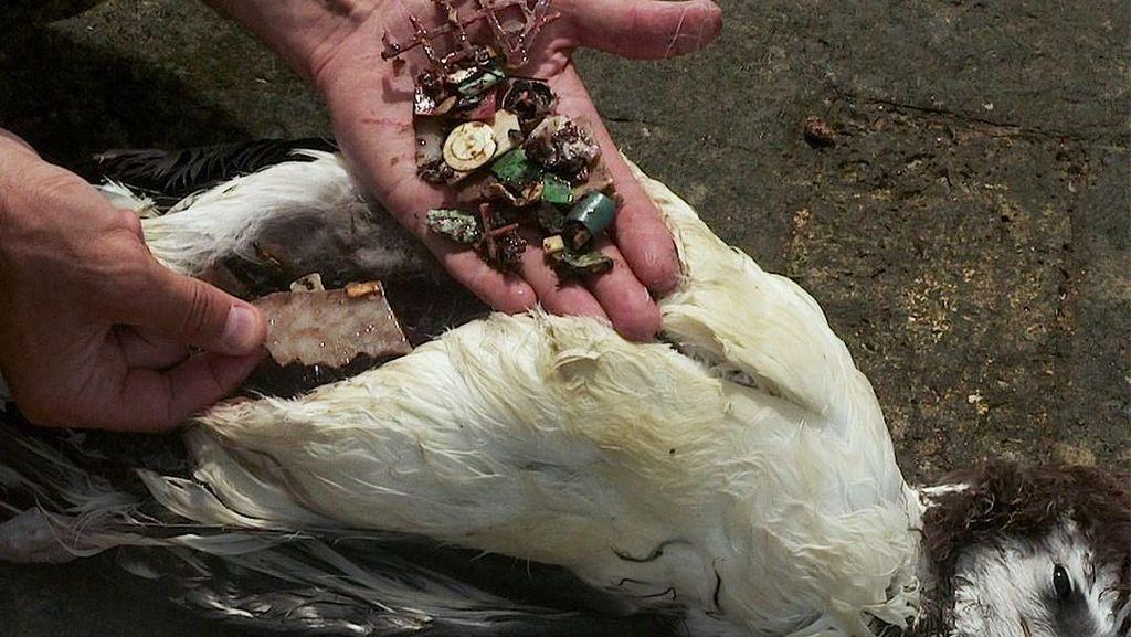 Viral! Burung Ini Mati Karena Makan Sampah