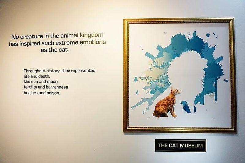Tren kafe kucing dan sejenisnya memang bukan barang baru, tapi bagaimana dengan Museum Kucing? Kamu tidak salah baca. Ternyata sungguh ada Museum Kucing atau Cat Museum di Singapura (thecatmuseum.com.sg)