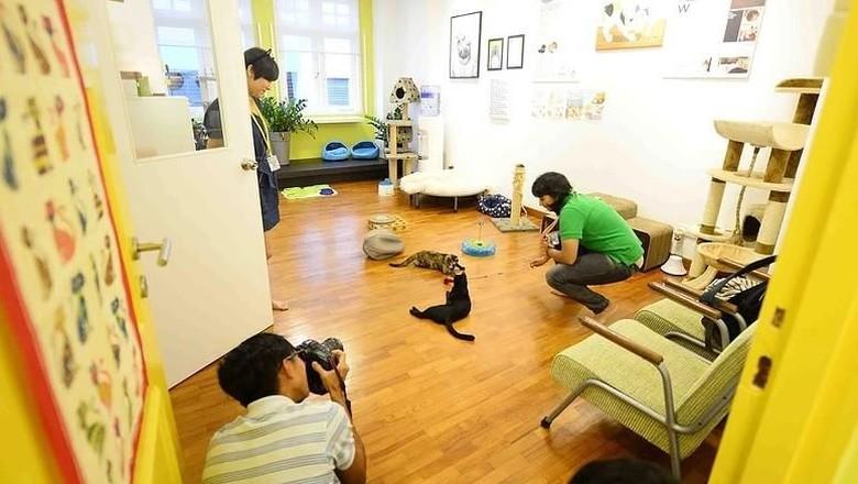 Museum Kucing di Singapura (thecatmuseum.com.sg)