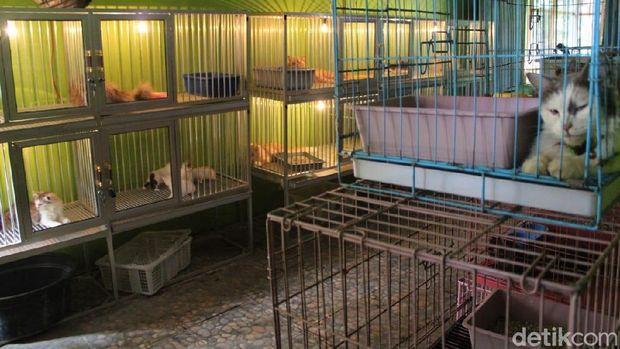 Tempat penitipan kucing di Jombang/