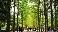 Pulau Nami yang merupakan destinasi favorit turis di Korea Selatan