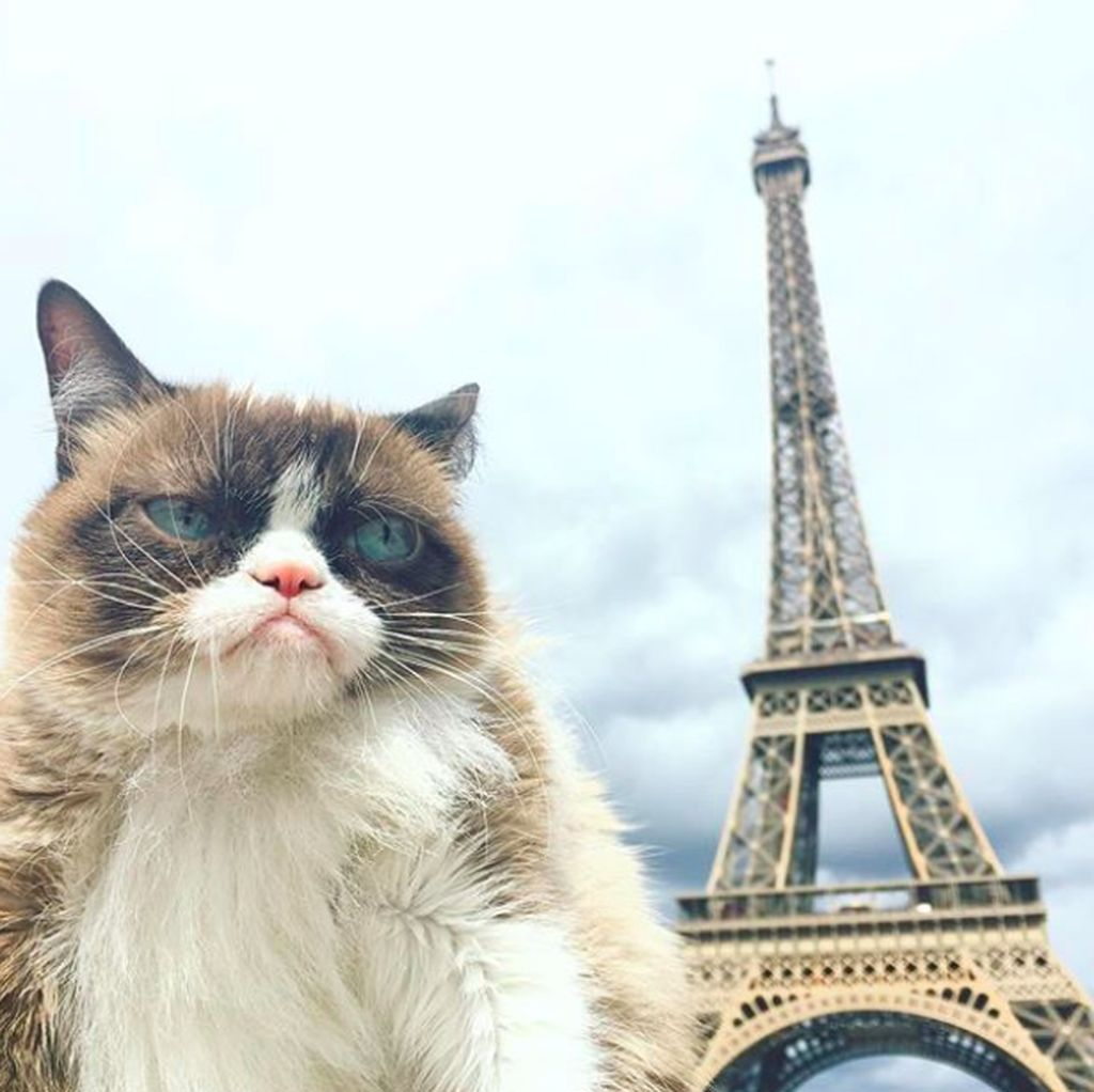 Mengenang Grumpy Cat, Si Pemurung yang Berlimpah Harta