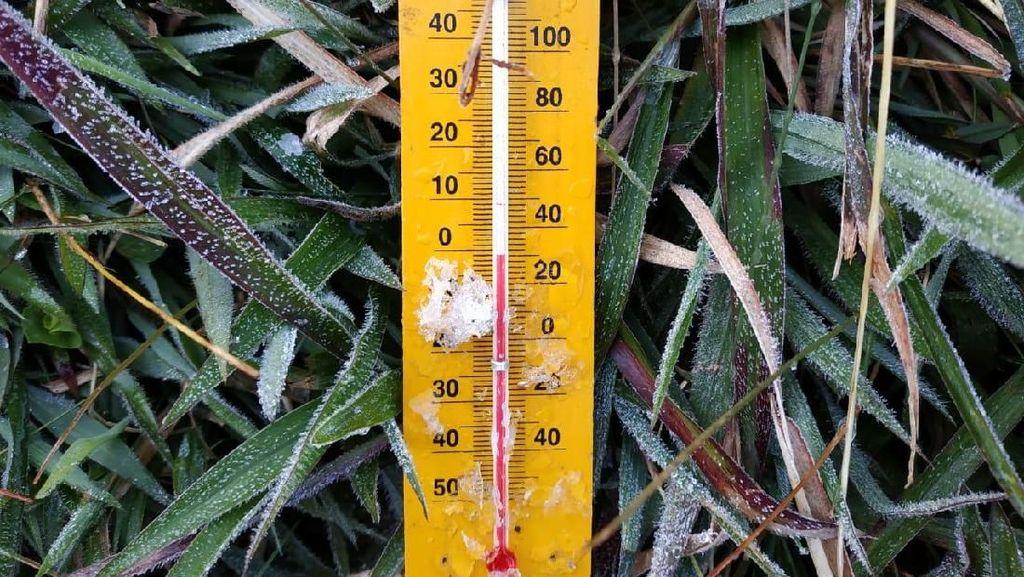 Suhu Minus 1 Derajat dan Bersalju di Dieng, Kebun Kentang Warga Aman
