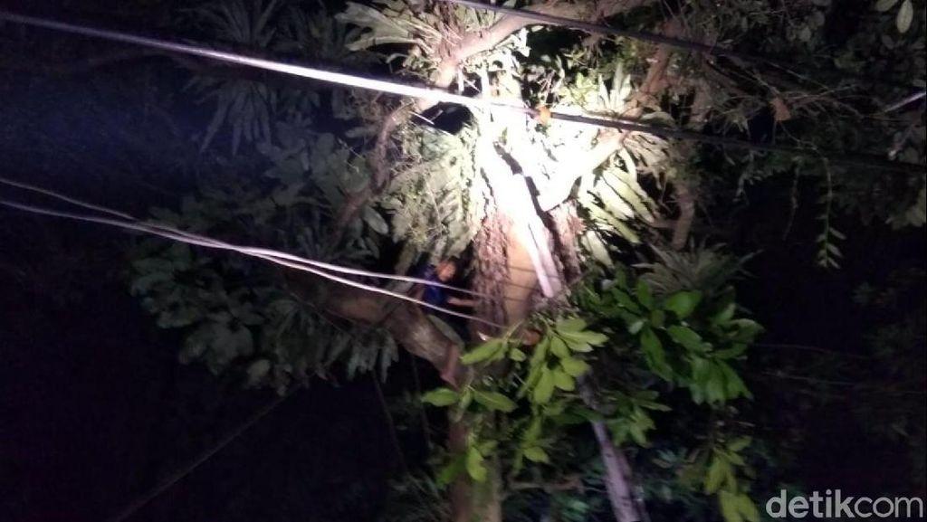 Diduga Depresi Biaya RS, Pria Sukabumi Panjat Pohon 15 Meter