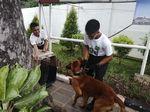 Hendropriyono Pamer Anjing, Siap Pinjamkan Jika Aksi 22 Mei Brutal