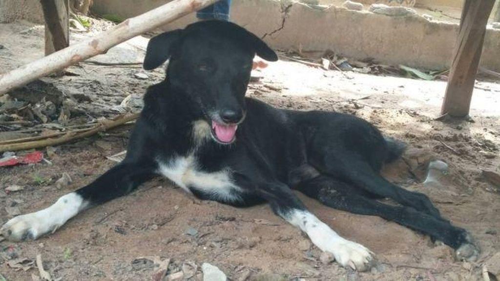 Viral Kisah Anjing Cacat Selamatkan Nyawa Bayi yang Dikubur Hidup-hidup