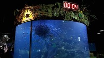 Lihat Feeding Show Ribuan Ekor Piranha di Sea World Ancol, Berani?