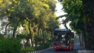 Bunga Tabebuya Bikin Kota Surabaya Lebih Berwarna