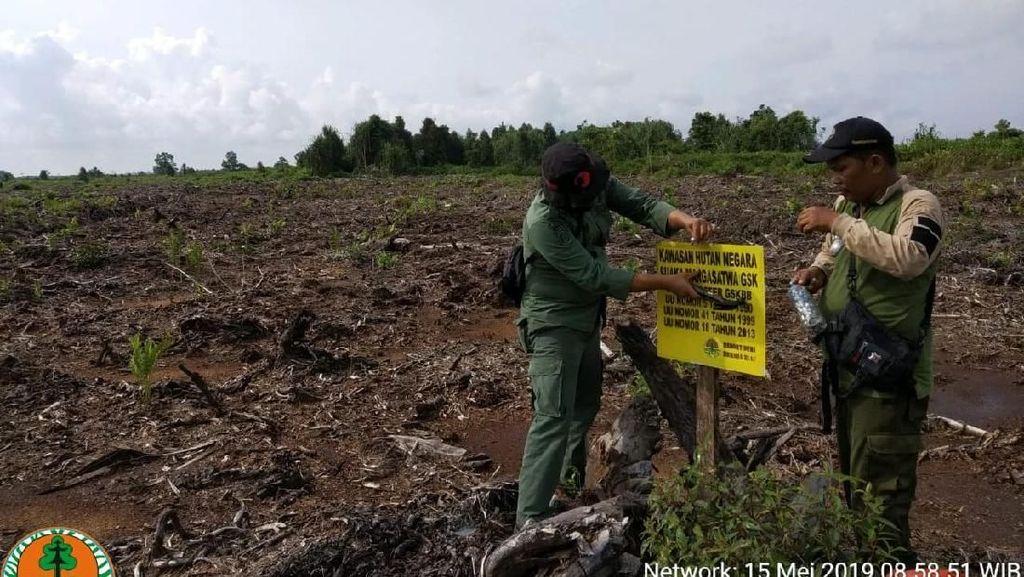 Kebun Sawit di Cagar Biosfer Riau Dimusnahkan
