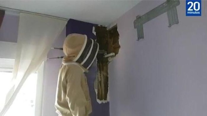 Sarang lebah membuat pasangan di Spanyol jadi sulit tidur. (Foto: BBC)
