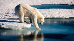 Lakukan 5 Hal Ini Untuk Membantu Mengurangi Pemanasan Global