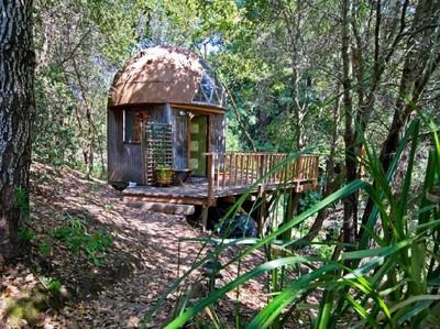 Penginapan Paling Banyak Dikunjungi di Dunia, Ada di Tengah Hutan