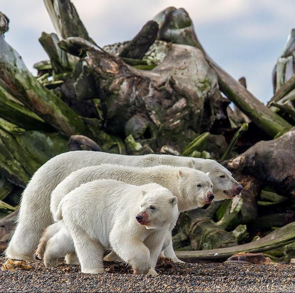 Karya Jawara BigPicture: Natural World Photography Bikin Takjub