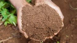 Washington Legalkan Pembuatan Kompos Dari Jasad Manusia