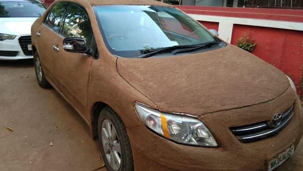 Wanita Lapisi Mobilnya dengan Kotoran Sapi Biar Adem