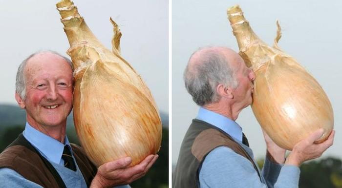 Kalau biasanya bawang bombay bisa digenggam dengan satu telapak tangan, yang satu ini jelas tidak bisa. Sebab ukurannya dua kali lipat lebih besar dari kepala manusia. Foto: Istimewa