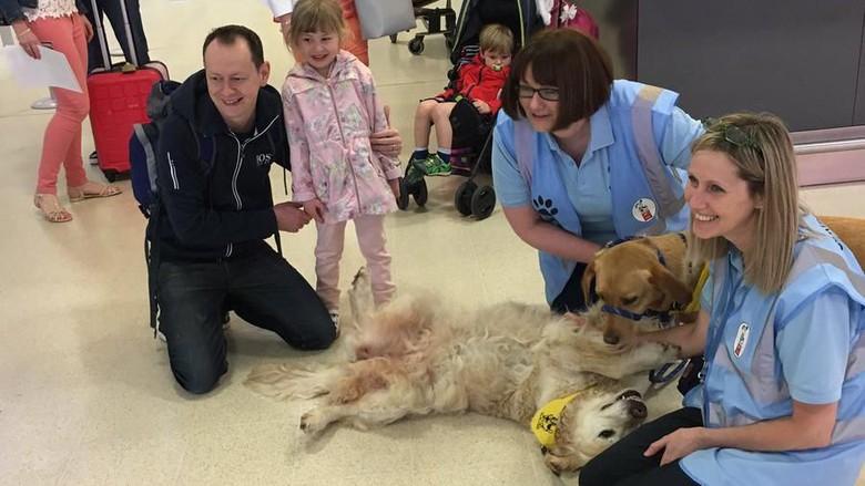 Aksi anjing gemas di bandara Skotlandia (Aberdeen Airport/Twitter)