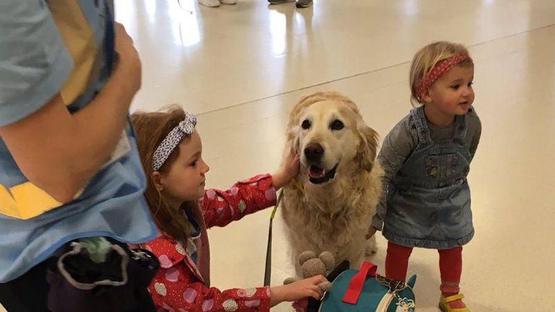 Beginilah aksi anjing-anjing di Bandara Aberdeen, Skotlandia. Mereka bertugas sebagai pereda strees untuk penumpang yang takut naik pesawat. (Aberdeen Airport/Twitter)