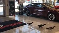 Diler Mobil Ini Adopsi Keluarga Bebek