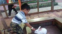 Di Serpong Ada Wisata City Farm, Tahu?