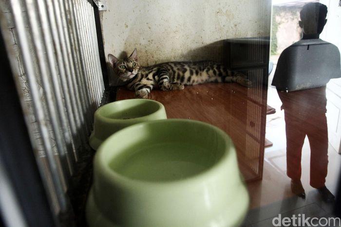 Mimo Cats Hotel di Jakarta Selatan sudah penuh oleh kucing yang dititipkan oleh pemiliknya, Senin (27/5/2019).