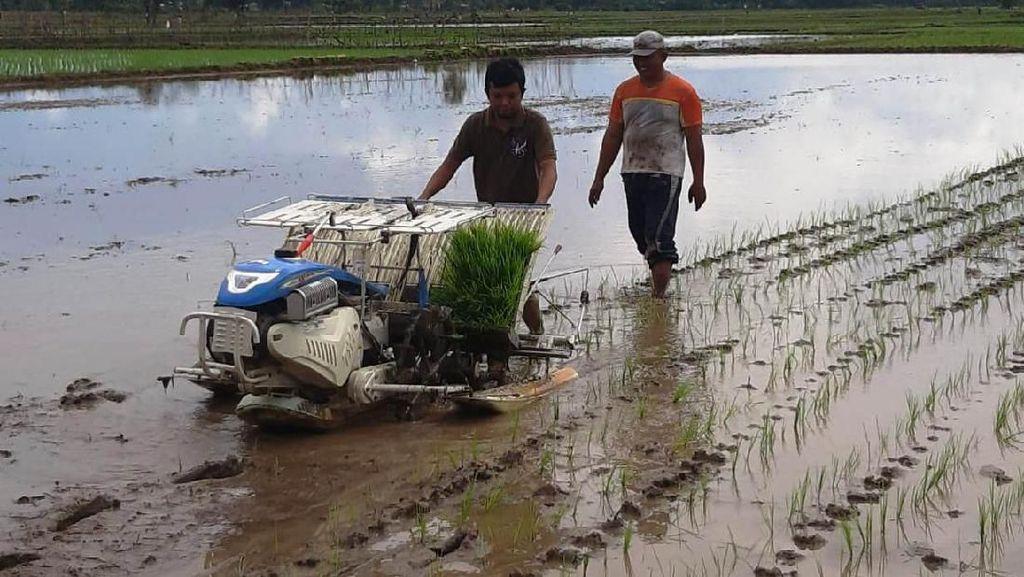 Petani Bakal Bisa Sewa Traktor Pakai Aplikasi Go-Jek Alsintan