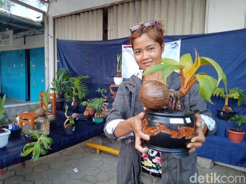 Pehobi Bonsai Kelapa Mulai Eksis Di Pangandaran