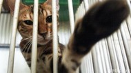 Jelang Lebaran, Hotel Kucing Ramai Dibooking