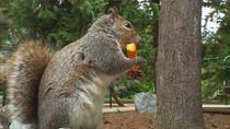 Gemasnya Aksi Tupai yang Nongkrong di Taman Agar Diberi Snack