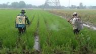 Kementan Pantau Ketat Peredaran Pupuk dan Pestisida