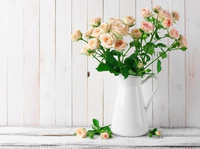 Light pink roses bouquet in jug against white rustic wooden wall.