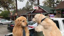 Guk guk! Anjing Jadi Walikota di Amerika
