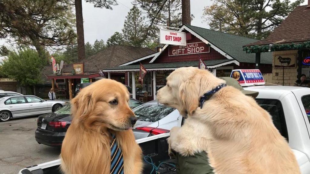 Foto: Walikota di Daerah Ini... Seekor Anjing