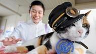 Saat Seekor Kucing Jadi Kepala Stasiun Kereta Api di Jepang