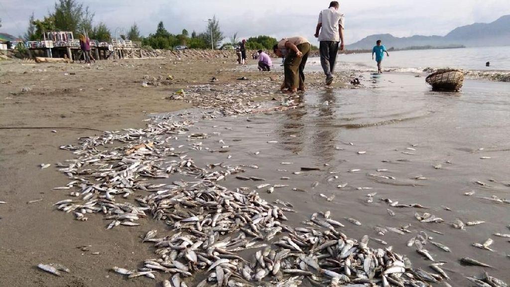 Teka-teki Ikan Mati Massal di Pantai Banda Aceh