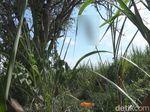 Warga Jombang Dikagetkan Penemuan Kerangka Manusia Tergantung di Pohon