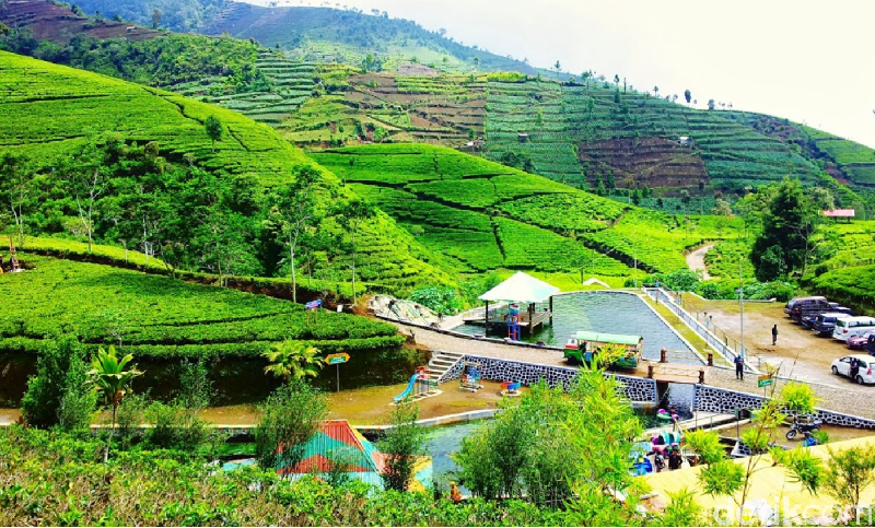 Agrowisata Kebun Teh Kaligua adalah pilihan cocok untuk liburan keluarga. Selain indah juga sejuk, ada beberapa wahana permainan yang bisa menguji adrenalin (Imam Suripto/detikcom)