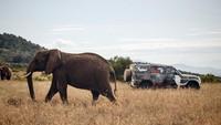 Dalam program pengujian yang unik. Land Rover Defender terbaru dikemudikan oleh para operator dari Tusk, sebuah inisiatif Afrika yang berfokus pada konservasi hewan di seluruh Kenya. Foto: Dok. Land Rover